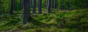 Proper Tree Care